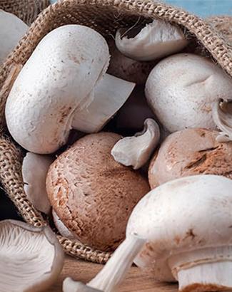 Destacada champiñones camarones cuíva