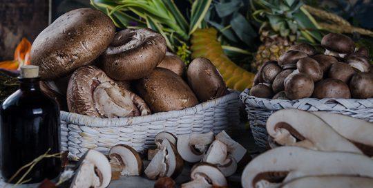 Setas de Cuivá primer marca especializada en Champiñones