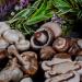 Composición Nutricional de los Champiñones